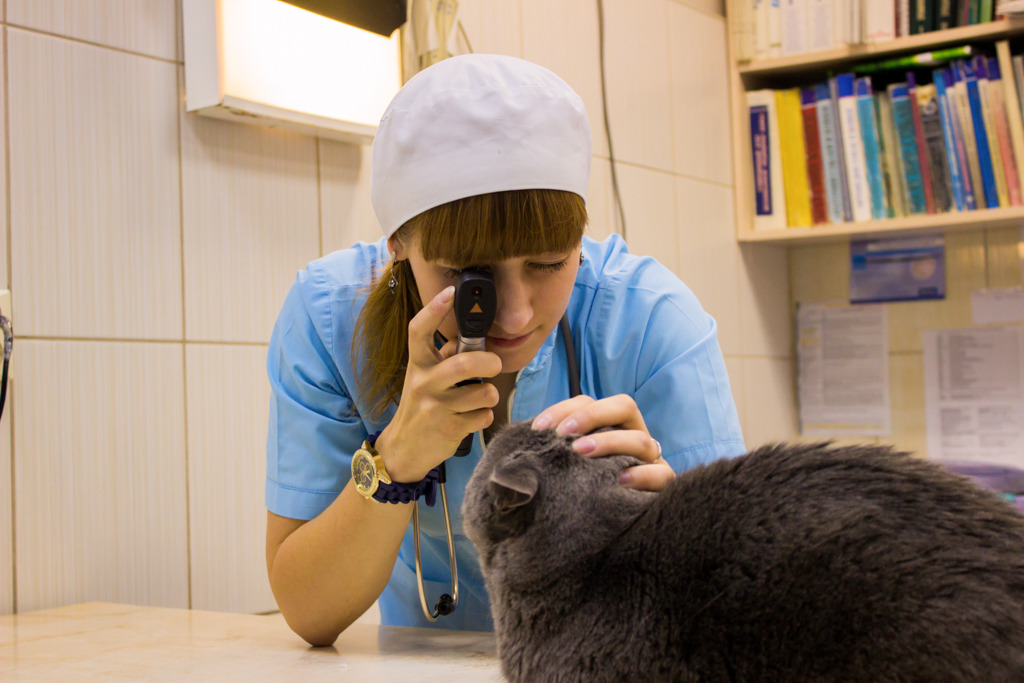 Беременность собаки в клинике «Захаровк и Фарафонтова» — 68-68-58 (круглосуточно)